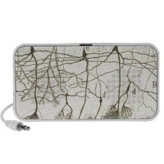 Cajal's Neurons 8 Mp3 Speaker