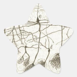 Cajal's Neurons 8 Star Sticker