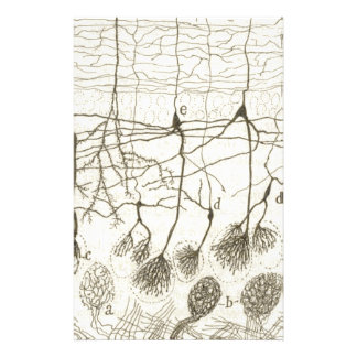 Cajal's Neurons 8 Stationery