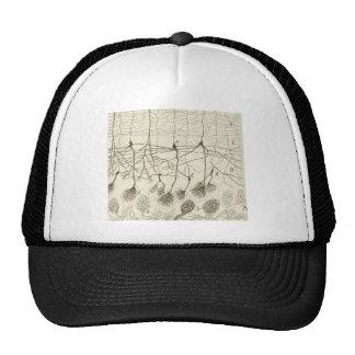 Cajal's Neurons 8 Trucker Hat