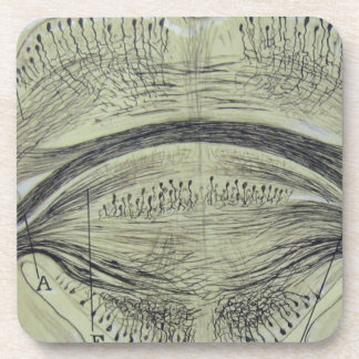 Cajal's spinal neurons - 5 coaster