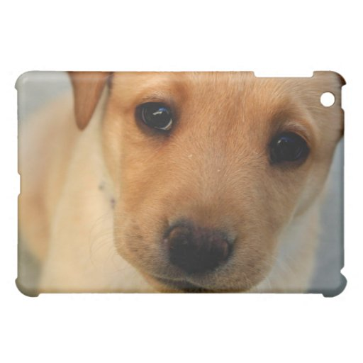 Cajas amarillas del iPad del perrito del laborator