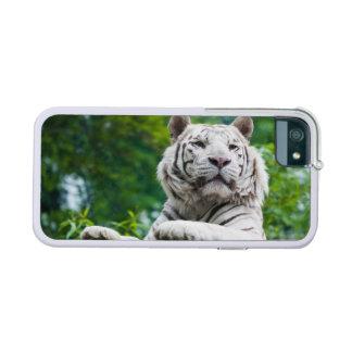 Cajas blancas del iPhone del tigre
