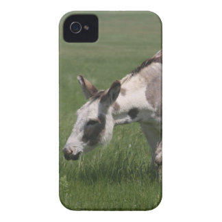 Cajas intrépidas de la zarzamora del burro Case-Mate iPhone 4 carcasa
