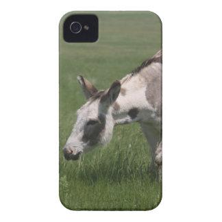 Cajas intrépidas de la zarzamora del burro iPhone 4 Case-Mate coberturas