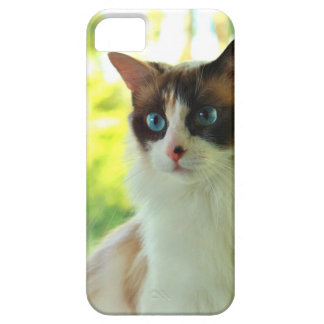 Cajas y pieles de encargo del teléfono del gatito funda para iPhone SE/5/5s
