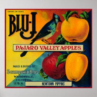 Cajón Azul-j LabelWatsonville, CA de Apple Póster