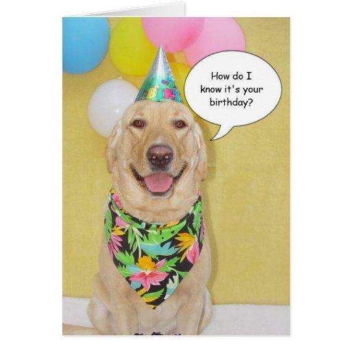 Cake Sniffing Dog Card