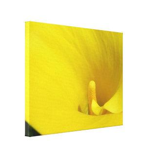Cala amarilla lienzo envuelto para galerias
