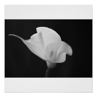 Cala blanco y negro Lilly Poster