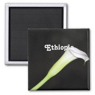 Cala de Etiopía Imán Cuadrado