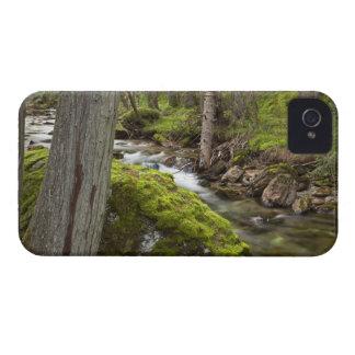 Cala de la misión cerca de St Ignatius, Montana Case-Mate iPhone 4 Cárcasas