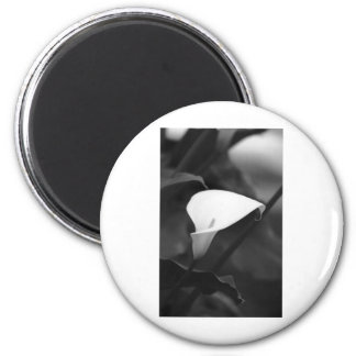 Cala-Lilly Flower Magnets
