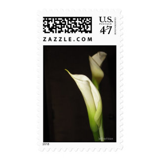 Cala Lily Duo Postage