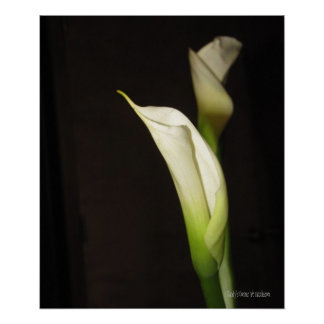 Cala Lily Duo Poster