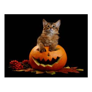 Calabaza asustadiza de Halloween y gatito somalí