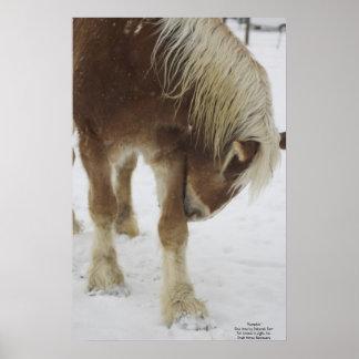 Calabaza en nieve póster