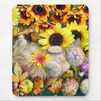 Calabaza y flores del ~ del gatito del gato del tapetes de raton