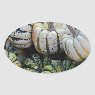 Calabazas, calabazas, cosecha de la caída pegatina ovalada
