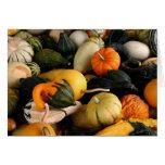 Calabazas coloridas Notecard del otoño Tarjetón