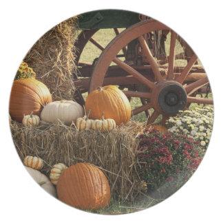 Calabazas de otoño y exhibición de la momia plato de cena