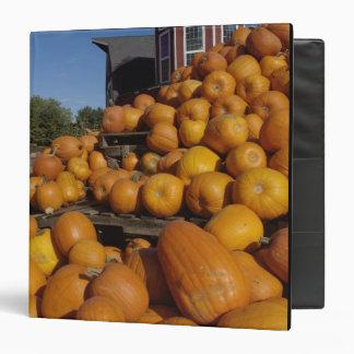 Calabazas en granja en otoño cerca de la concordia