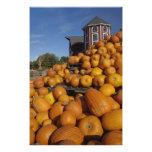 Calabazas en granja en otoño cerca de la concordia cojinete