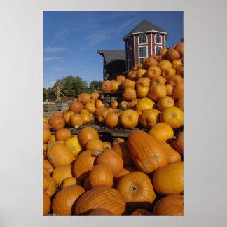 Calabazas en granja en otoño cerca de la concordia póster