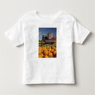 Calabazas en granja en otoño cerca de la camisetas