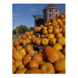Calabazas en granja en otoño cerca de la postal