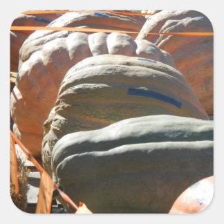 Calabazas gigantes pegatina cuadradas personalizada