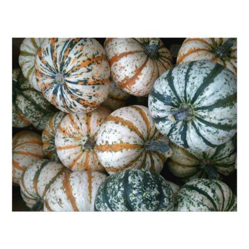 Calabazas multicoloras de la cosecha del otoño tarjetas informativas