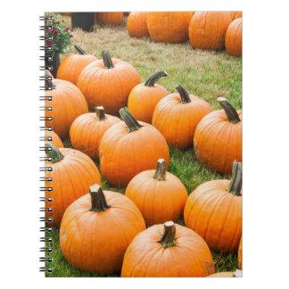 Calabazas para la venta en el mercado de un granje spiral notebook