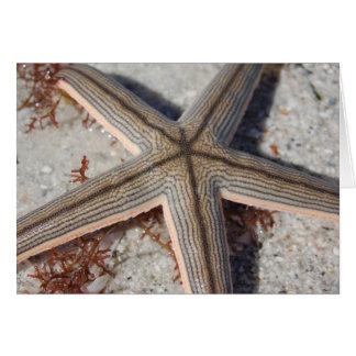 Caladesi Island Starfish Card
