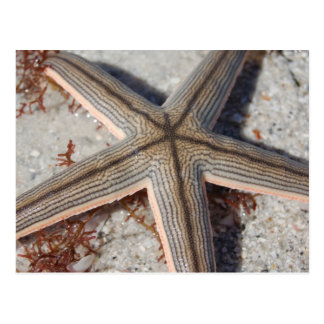 Caladesi Island Starfish Postcard