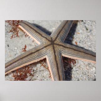 Caladesi Island Starfish Poster