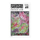 caladiums_plant_painting, Caladiums Postage Stamps