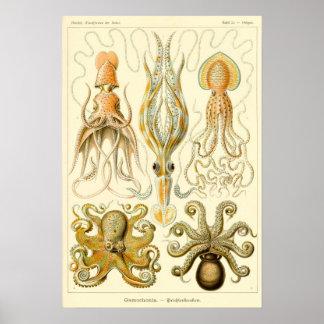 Calamar Gamochonia del pulpo del vintage de Ernst Póster