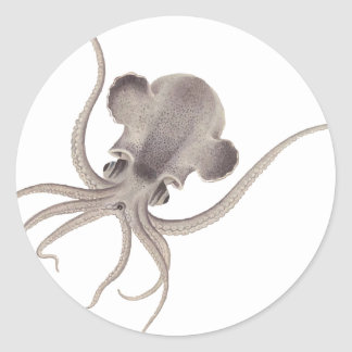 Calamari Pegatina Redonda