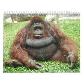 Calandrias 24 del animal calendarios