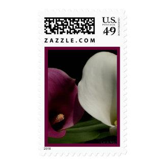 Calas blancas púrpuras sellos