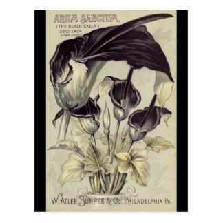 Calas negras del vintage tarjetas postales