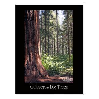 Calaveras Big Trees Post Cards