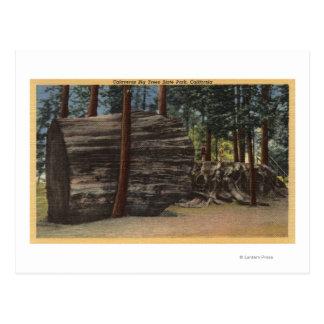 Calaveras Big Trees State Park Post Card