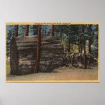 Calaveras Big Trees State Park Poster