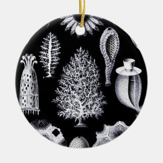 Calcispongiae Ernst von Haeckel Ceramic Ornament