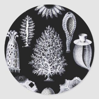 Calcispongiae Ernst von Haeckel Round Stickers