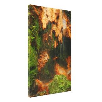 Caldeira Velha - Azores Canvas Print