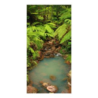 Caldeira Velha park Photo Card