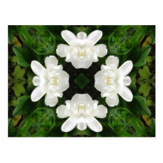 Caleidoscopio hermoso 2 del Gardenia 5 Postales